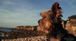 video reportaje de mascota thor