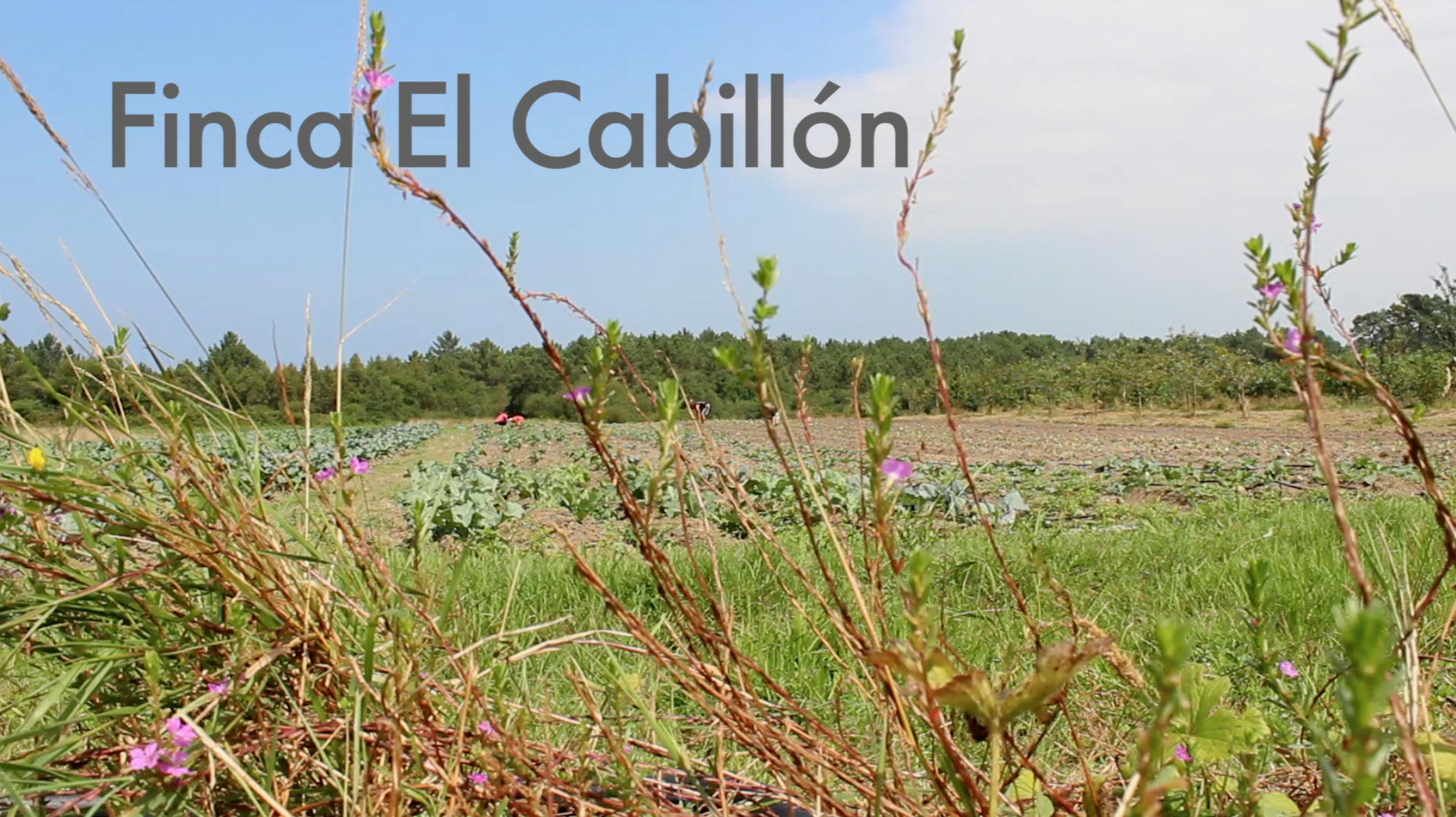 Finca El Cabillón de productos ecológicos de la Fundación Edes en el Occidente de Asturias